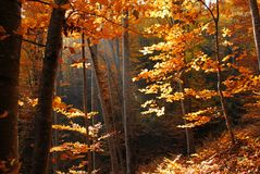 Forest at autumn stock photo