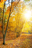 Forest in autumn Stock Photography