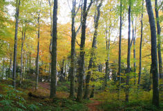 Forest at autumn. Forest colors royalty free stock photo