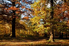 Forest in autumn Royalty Free Stock Photography