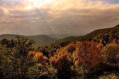 Forest. Autumn in 2015 Royalty Free Stock Images
