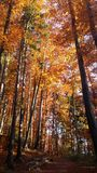 FOREST IN THE AUTUMN. BEAUTIFUL FOREST IN THE AUTUMN stock photography