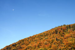 Forest at autumn and blue sky. Orange forest in autumn and blue sky with moon, in Aravis, France Royalty Free Stock Photography