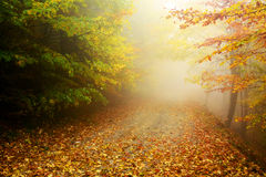 Forest autumn colors Stock Photography