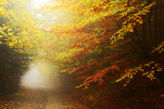 Forest autumn colors Royalty Free Stock Photos