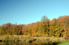 Autumn Forest with blue sky. Forest in autumn colors with a blue sky Royalty Free Stock Photos