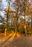 Forest in autumn colors stock photos