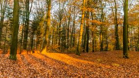 Forest in autumn colors stock image