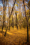 Forest in autumn colors Royalty Free Stock Photos