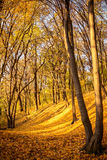 Forest in autumn colors Royalty Free Stock Photo