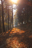 Forest in autumn colors. In Transylvania Royalty Free Stock Photos