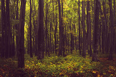 Forest during autumn. Extreme color graded. The forest during a morning in autumn royalty free stock photos