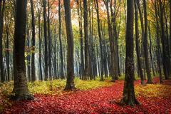 Forest during autumn. Extreme color graded. The forest during a morning in autumn stock photos