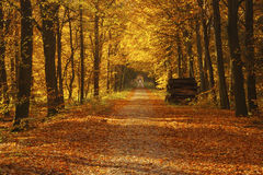 A forest in autumn in fall colors Stock Image
