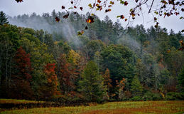 Forest in autumn Stock Photos