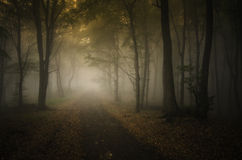 Forest in autumn with fog and road Royalty Free Stock Images