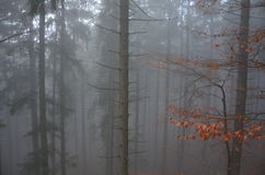 Forest in the autumn fog Royalty Free Stock Photos