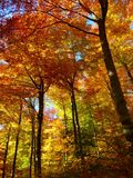 Forest, Autumn Forest, Colorful Royalty Free Stock Images