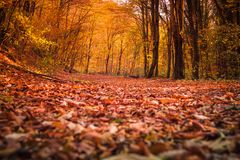 The forest in autumn royalty free stock photos