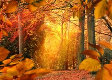 Autumn mood in the forest stock images