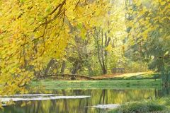 Forest in autumn. Golden autumn leaves in a park with a park bench and a bridge at a pond on a sunny autumn day Stock Image