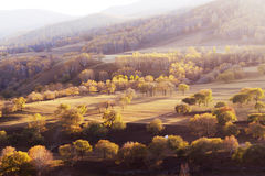 Forest in autumn. Grassland and tree in inner mongolia in autumn stock photo