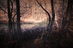 Forest in autumn on lake edge Stock Image