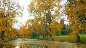 Forest autumn lake leaves. Morning autumn leaves forest lake stock footage