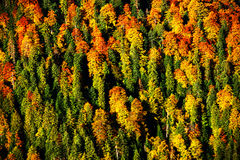 Forest autumn landscape Stock Image