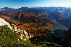 Forest autumn landscape Stock Photos