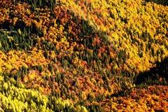 Forest autumn landscape Stock Images