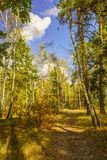 Forest autumn landscape Royalty Free Stock Photography