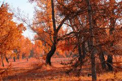 Forest autumn landscape on a sunny day.  Stock Image