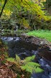 Forest autumn landscape with water stream, ferns and trees stock photos