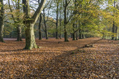 Forest in the autumn Stock Images