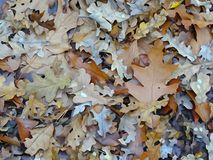 Forest autumn leaves lightly watercolored royalty free stock photos