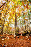 The Forest in Autumn. In Montenegro stock photo