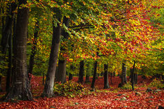 Forest during autumn Stock Images