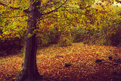 Forest during autumn Stock Photography
