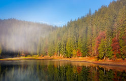 Forest in autumn morning fog on the lake Royalty Free Stock Image