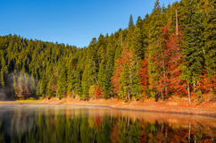 Forest in autumn morning mist on the lake. Beautiful and vivid scenery with colorful foliage and abstract reflections. fine weather condition under clear blue Stock Photos