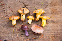 Forest autumn mushrooms Stock Photography