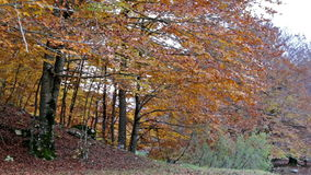 Forest in autumn in the national park of Abruzzo in Italy. stock video footage