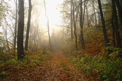 Forest in autumn. Stock Photography