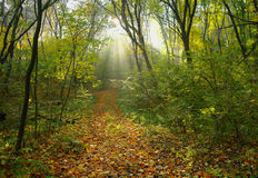 Forest in autumn. Royalty Free Stock Photography