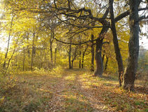 Forest in autumn. Stock Image