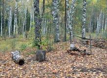 Forest, autumn, nature, landscape, tree, trees, fall, woods, park, green, season, pine, wood, foliage, fog, road, birch, light, pa stock photography