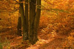 Colorful forest at autumn. stock photography