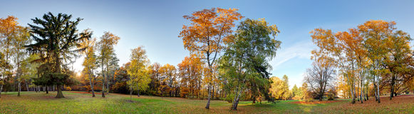 Forest autumn panorama in park Stock Image