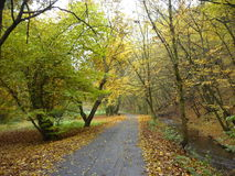 Forest in the autumn. A path in the forest in the autumn stock photography